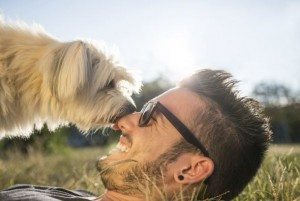 comparador de seguros para perros