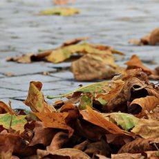 Descubre Conil en otoño